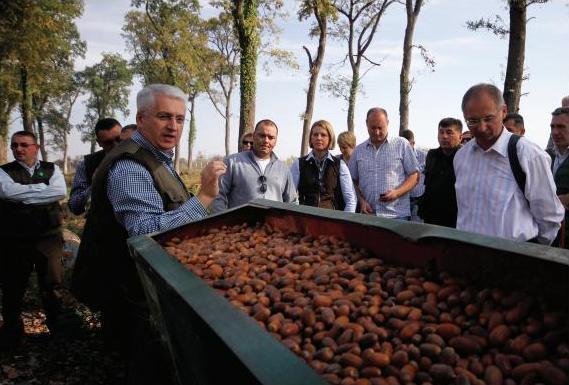 Biomasom protiv energetske bede: pročitajte tekst Voje Tufegdžića